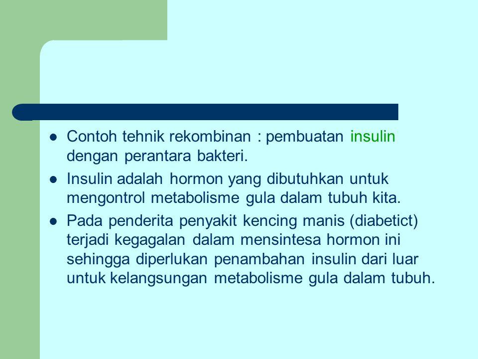 Contoh tehnik rekombinan : pembuatan insulin dengan perantara bakteri.