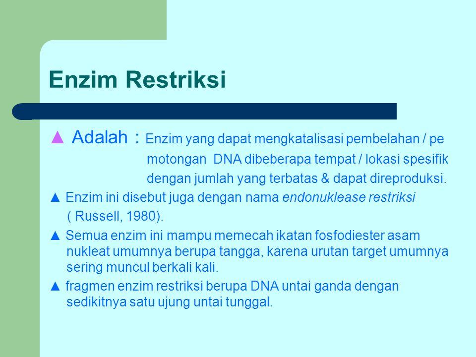Enzim Restriksi ▲ Adalah : Enzim yang dapat mengkatalisasi pembelahan / pe. motongan DNA dibeberapa tempat / lokasi spesifik.