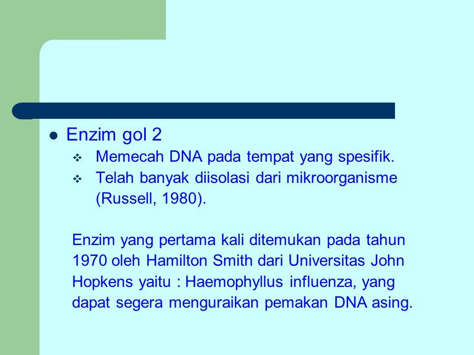 Enzim gol 2 Memecah DNA pada tempat yang spesifik.
