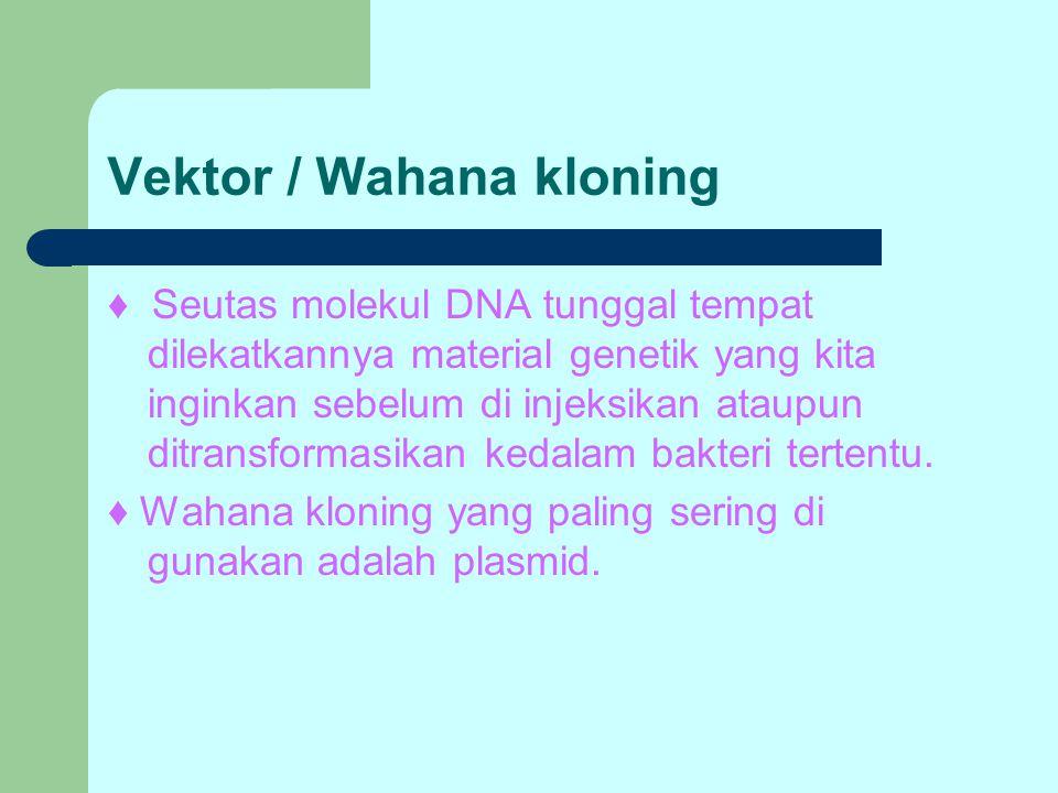 Vektor / Wahana kloning