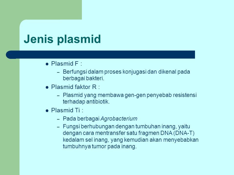 Jenis plasmid Plasmid F : Plasmid faktor R : Plasmid Ti :