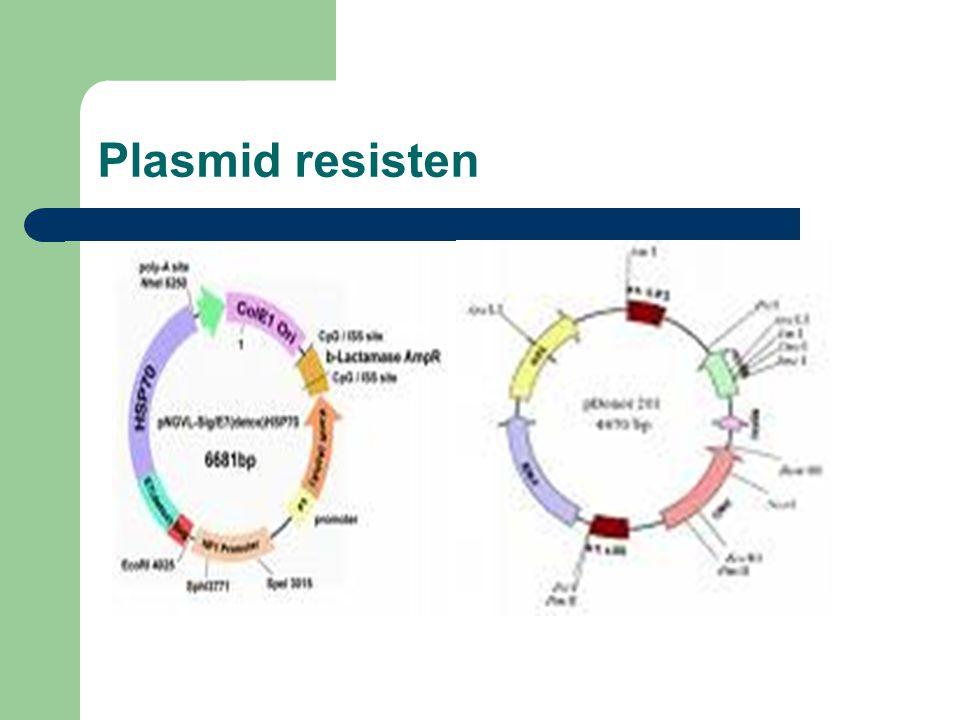 Plasmid resisten