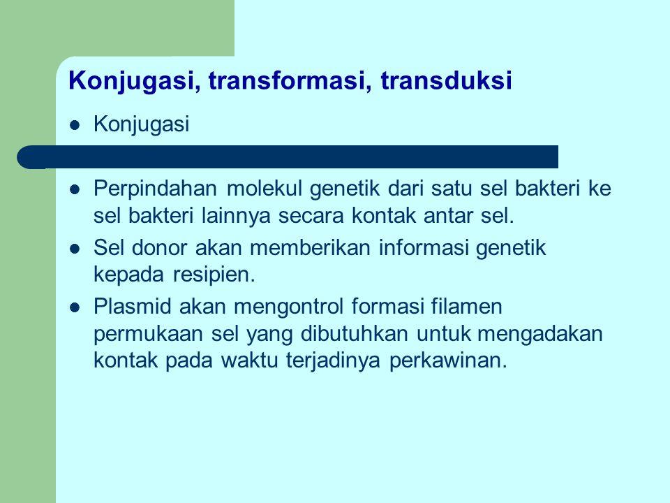 Konjugasi, transformasi, transduksi