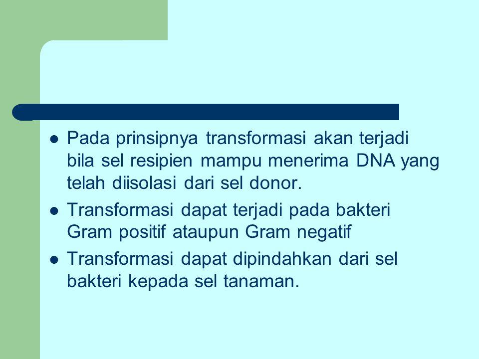 Pada prinsipnya transformasi akan terjadi bila sel resipien mampu menerima DNA yang telah diisolasi dari sel donor.