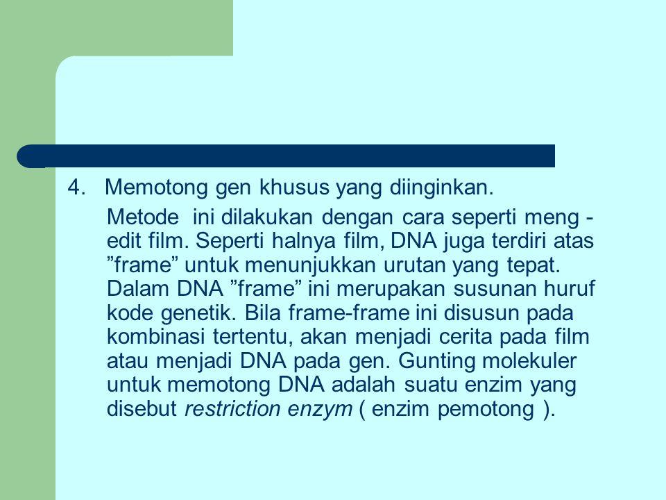 4. Memotong gen khusus yang diinginkan.