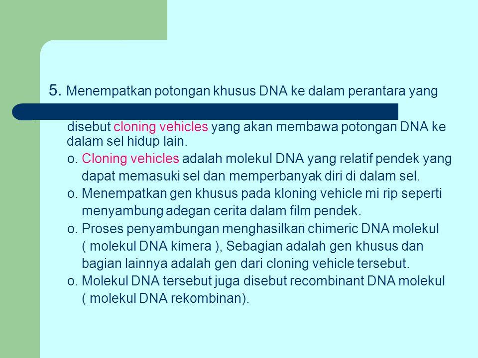 5. Menempatkan potongan khusus DNA ke dalam perantara yang