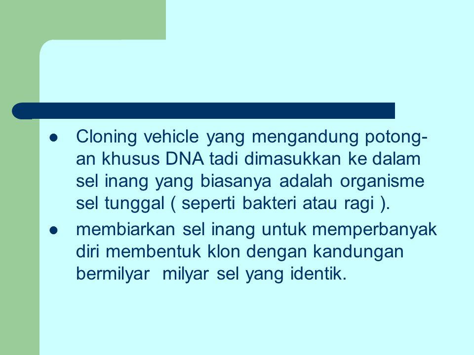 Cloning vehicle yang mengandung potong- an khusus DNA tadi dimasukkan ke dalam sel inang yang biasanya adalah organisme sel tunggal ( seperti bakteri atau ragi ).