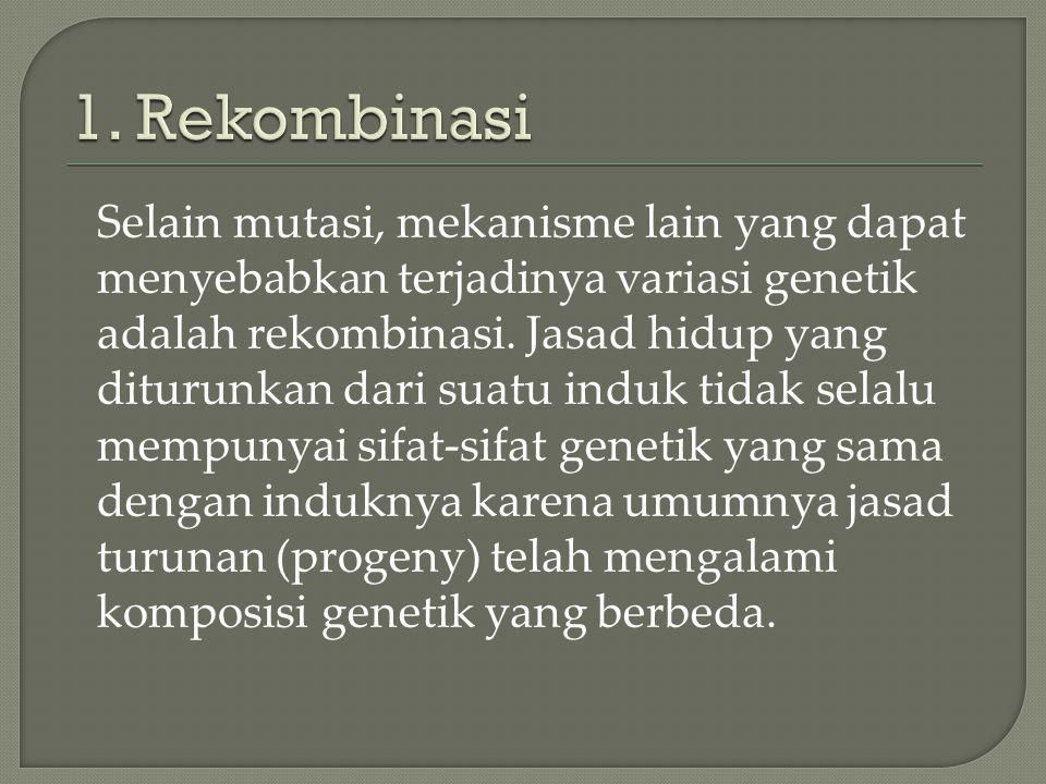 1. Rekombinasi