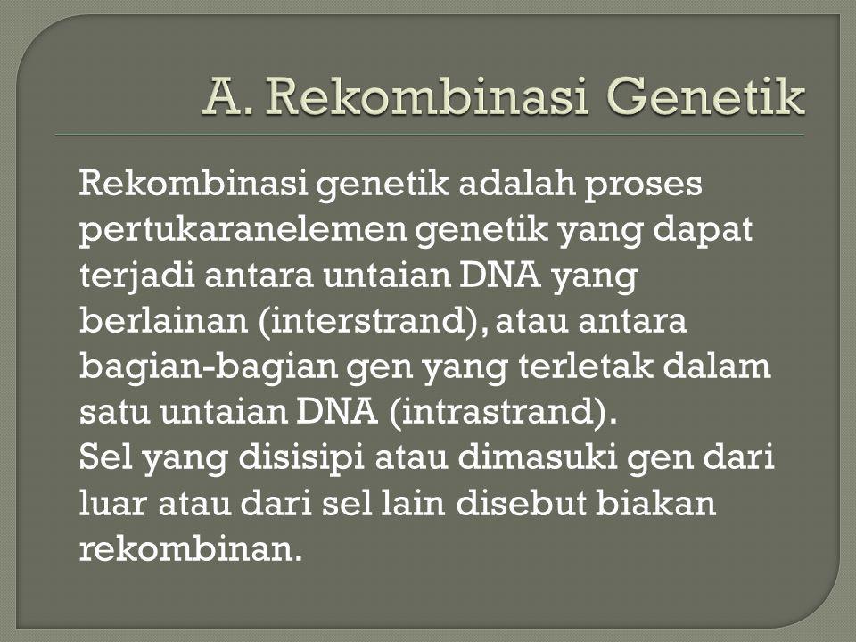 A. Rekombinasi Genetik