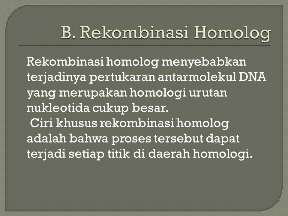 B. Rekombinasi Homolog