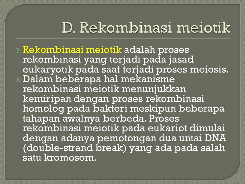 D. Rekombinasi meiotik Rekombinasi meiotik adalah proses rekombinasi yang terjadi pada jasad eukaryotik pada saat terjadi proses meiosis.