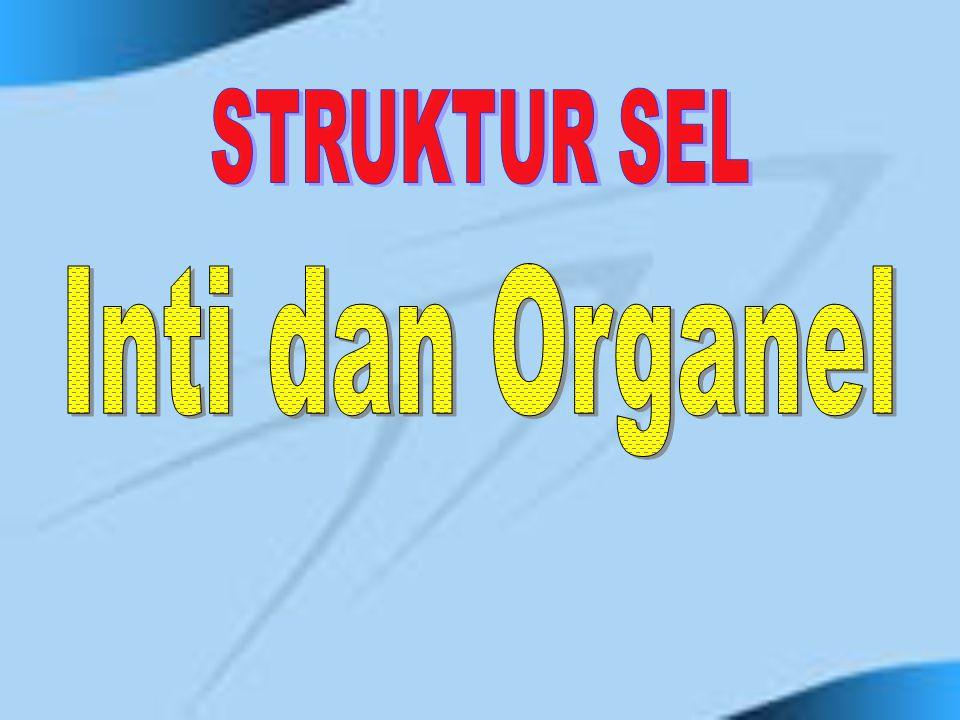 STRUKTUR SEL Inti dan Organel