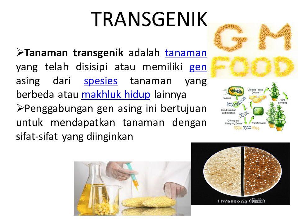 TRANSGENIK Tanaman transgenik adalah tanaman yang telah disisipi atau memiliki gen asing dari spesies tanaman yang berbeda atau makhluk hidup lainnya.