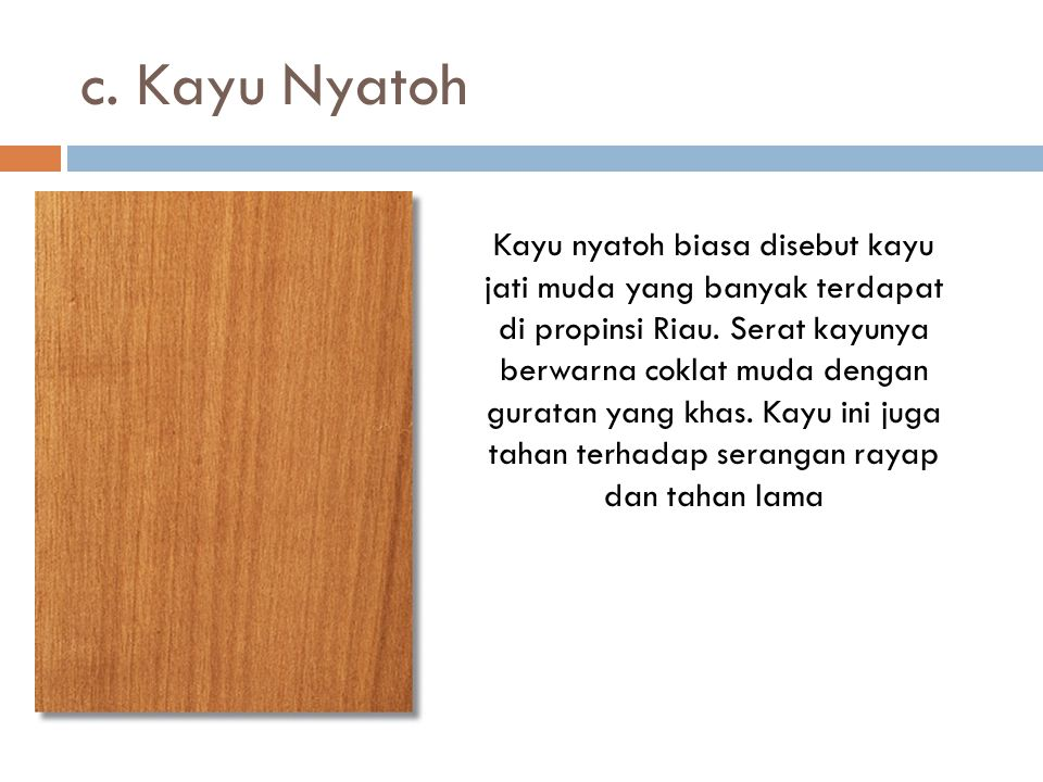 c. Kayu Nyatoh