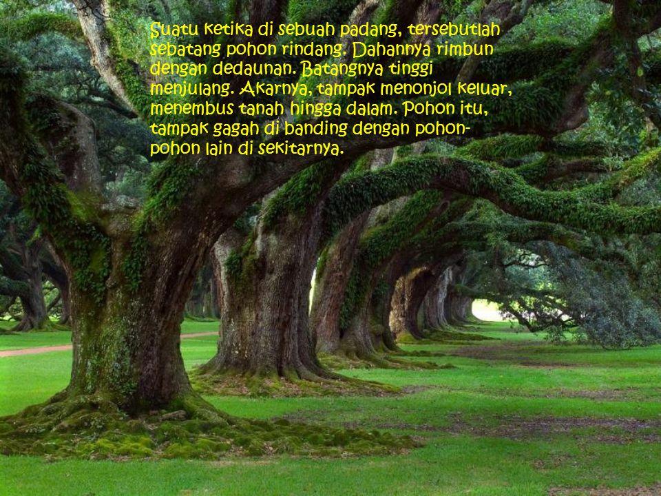 Suatu ketika di sebuah padang, tersebutlah sebatang pohon rindang