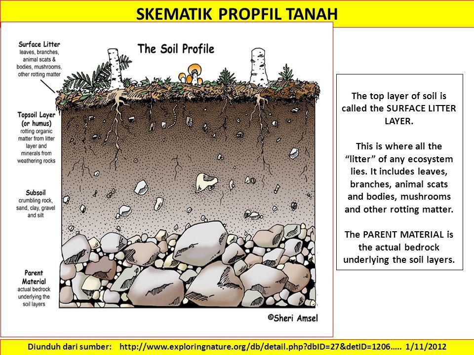 SKEMATIK PROPFIL TANAH