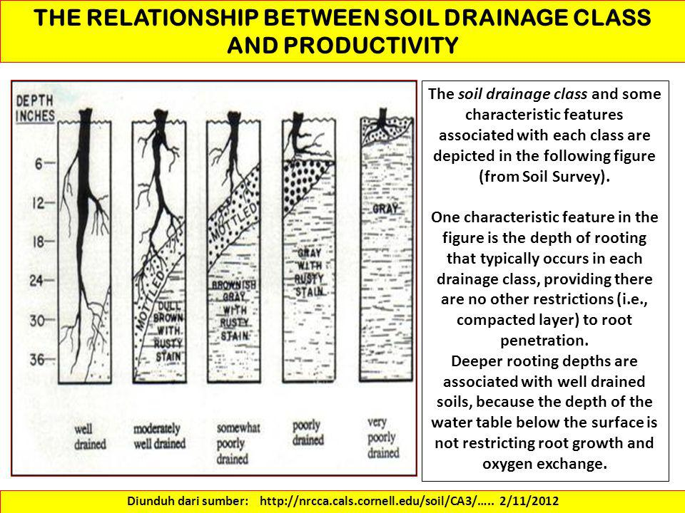 THE RELATIONSHIP BETWEEN SOIL DRAINAGE CLASS AND PRODUCTIVITY