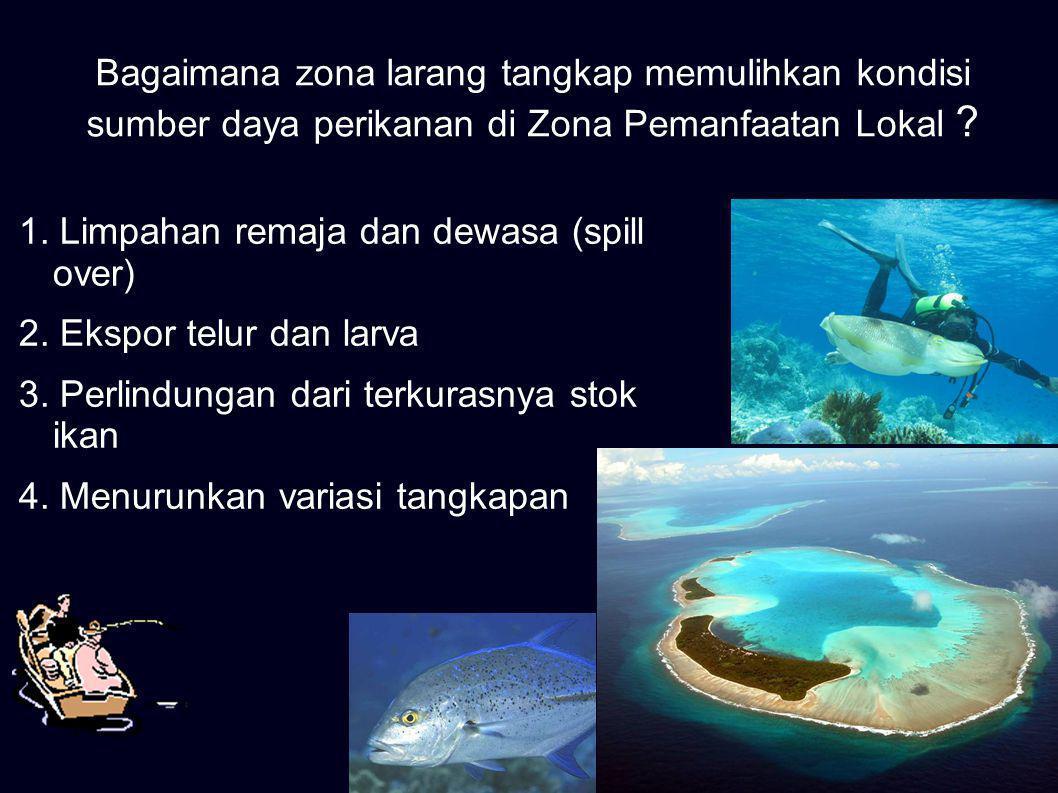 Bagaimana zona larang tangkap memulihkan kondisi sumber daya perikanan di Zona Pemanfaatan Lokal