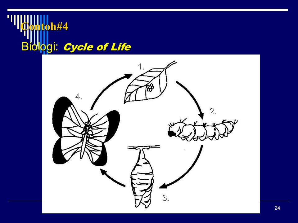 Contoh#4 Biologi: Cycle of Life 1. 4. 2. 3.