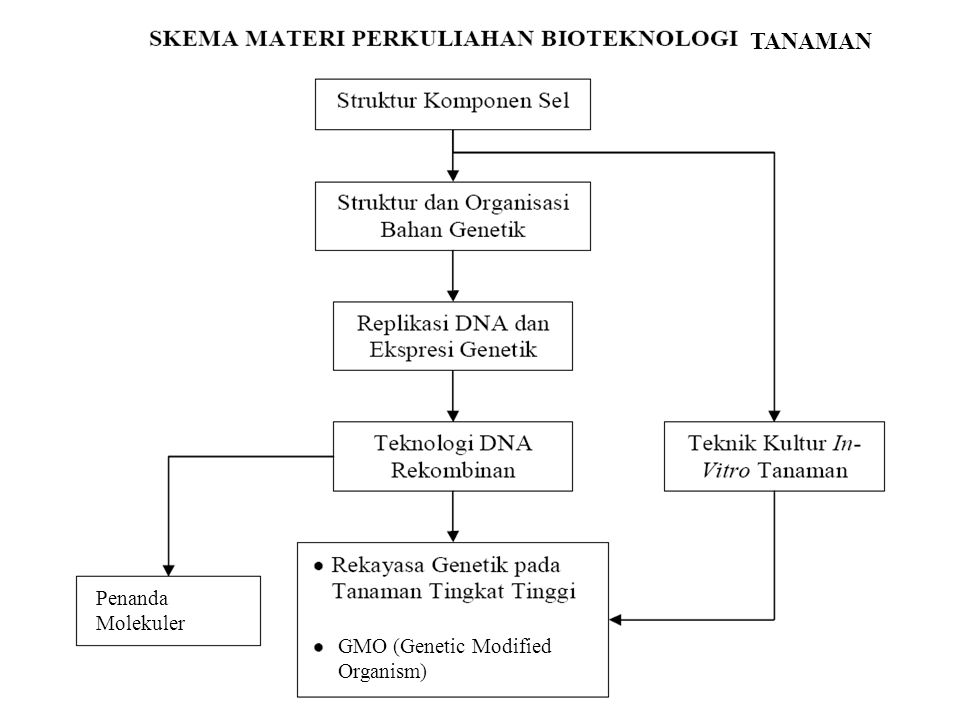 TANAMAN ** bio Penanda Molekuler GMO (Genetic Modified Organism)