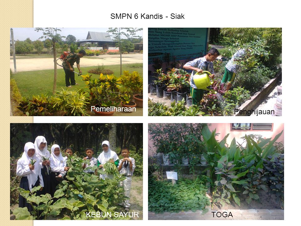 SMPN 6 Kandis - Siak Pemeliharaan Penghijauan KEBUN SAYUR TOGA