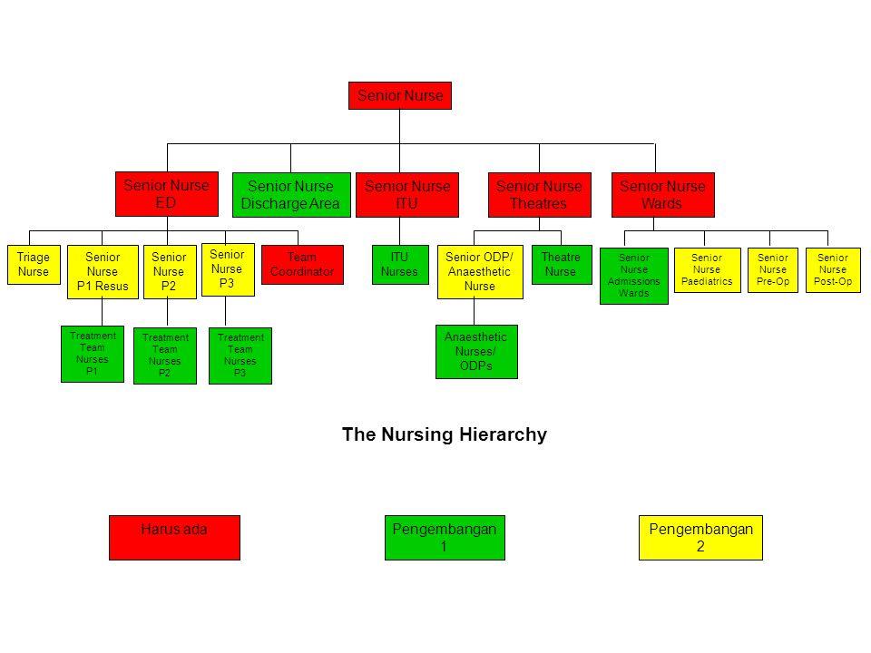 The Nursing Hierarchy Senior Nurse Senior Nurse ED Senior Nurse