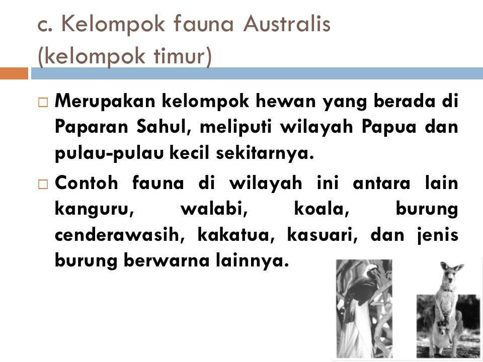 c. Kelompok fauna Australis (kelompok timur)
