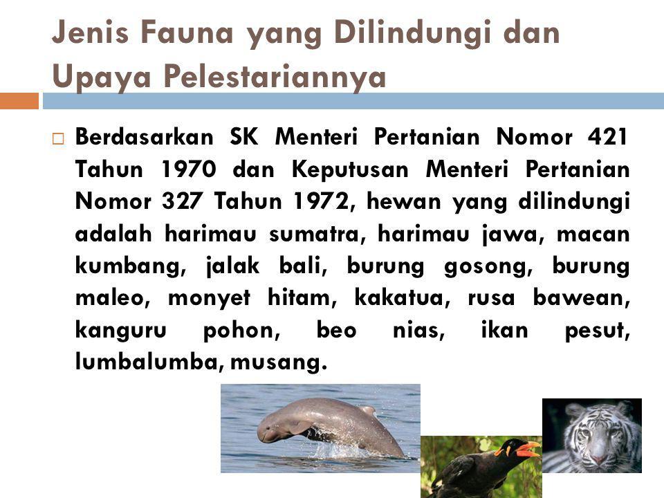 Jenis Fauna yang Dilindungi dan Upaya Pelestariannya
