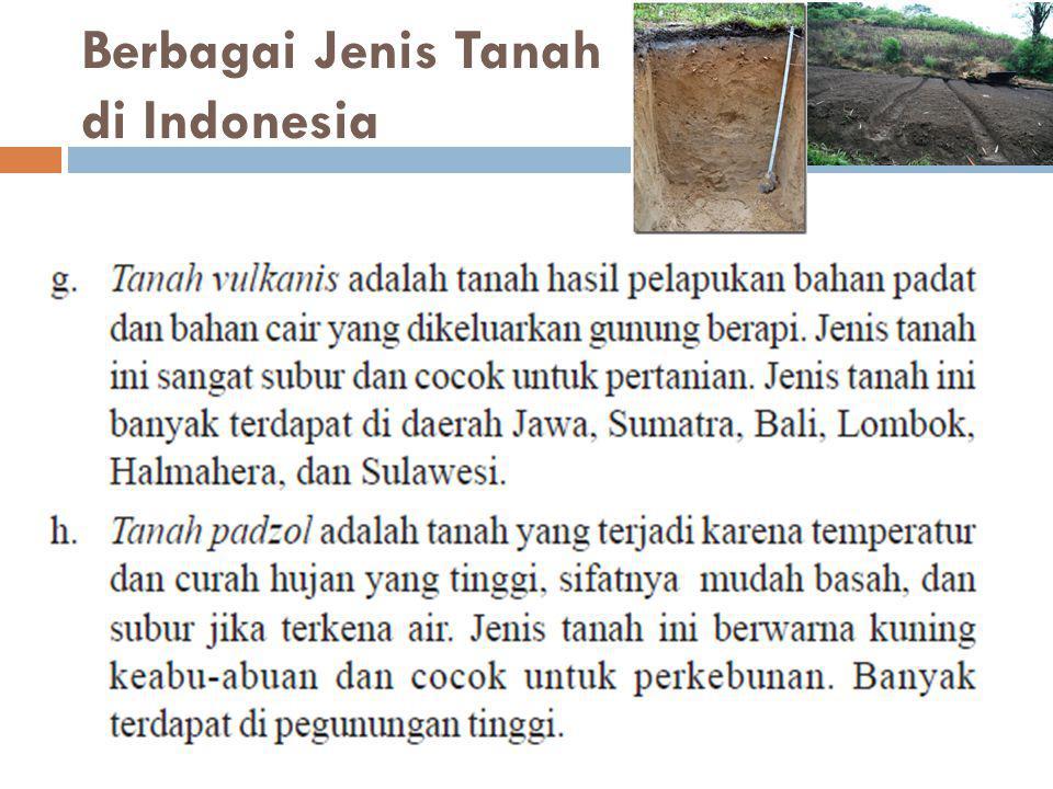Berbagai Jenis Tanah di Indonesia