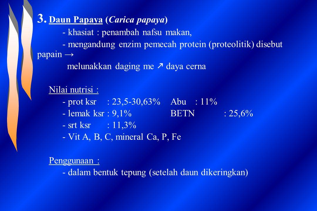 3. Daun Papaya (Carica papaya)