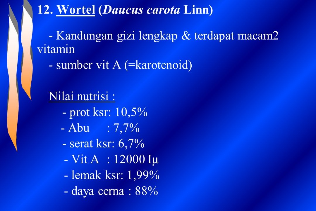 12. Wortel (Daucus carota Linn)