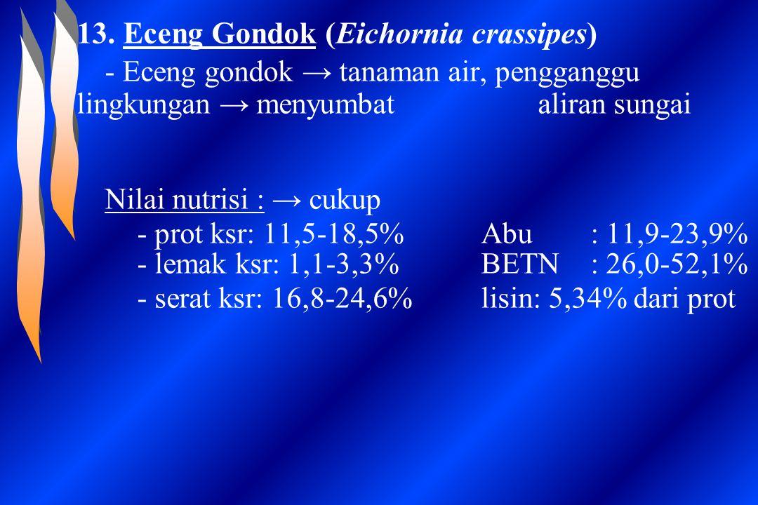 13. Eceng Gondok (Eichornia crassipes)