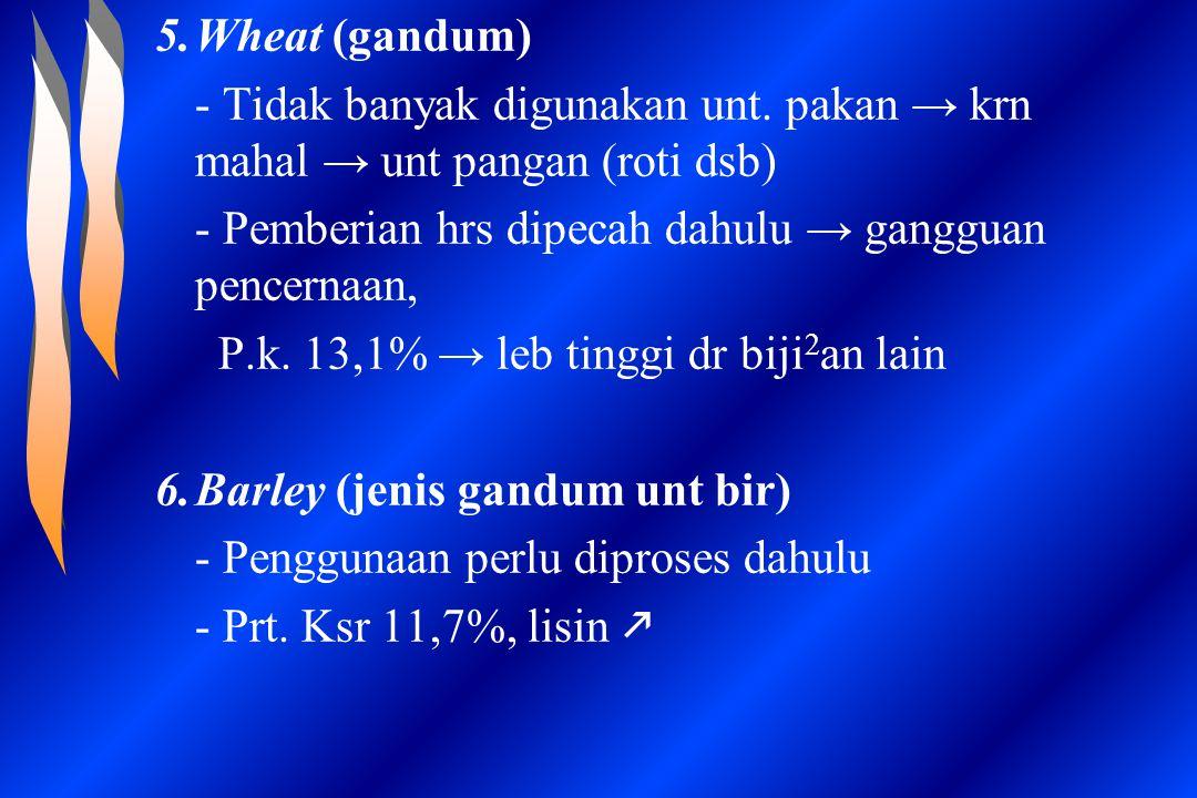 Wheat (gandum) - Tidak banyak digunakan unt. pakan → krn mahal → unt pangan (roti dsb) - Pemberian hrs dipecah dahulu → gangguan pencernaan,