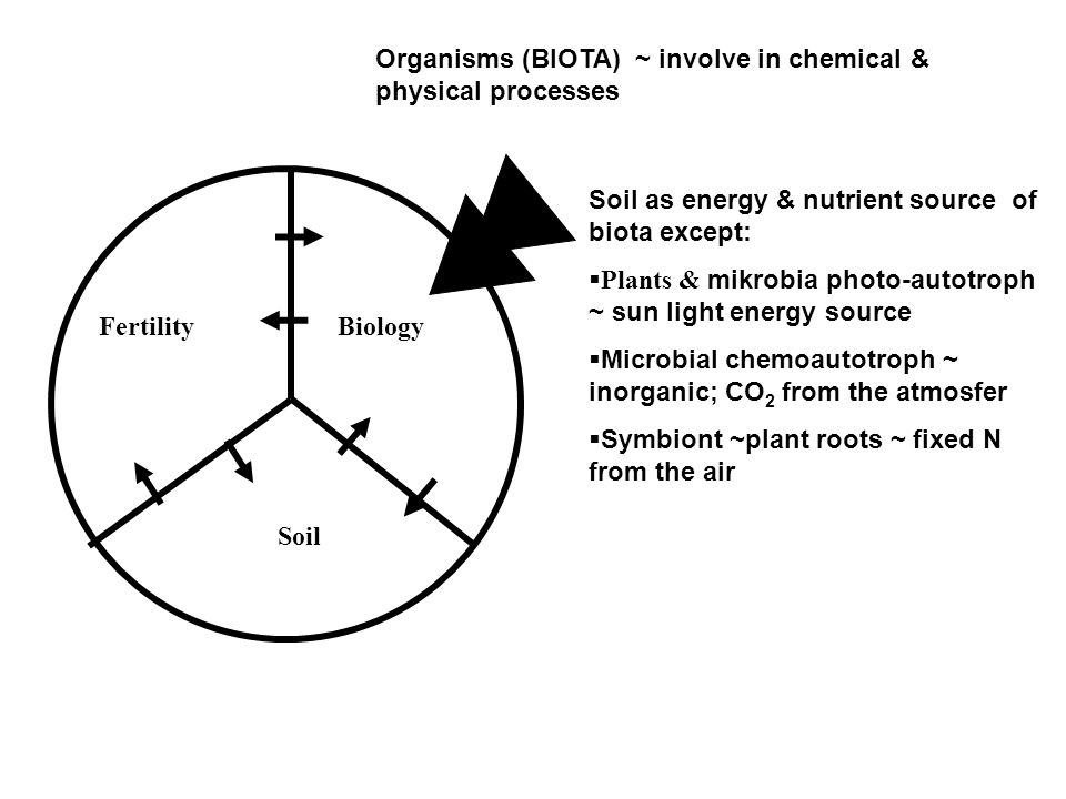 Biology Soil. Fertility. Organisms (BIOTA) ~ involve in chemical & physical processes. Soil as energy & nutrient source of biota except: