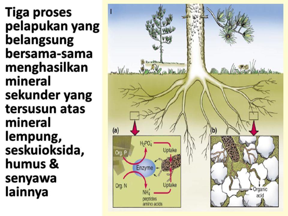 Tiga proses pelapukan yang belangsung bersama-sama menghasilkan mineral sekunder yang tersusun atas mineral lempung, seskuioksida, humus & senyawa lainnya