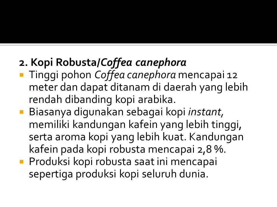 2. Kopi Robusta/Coffea canephora