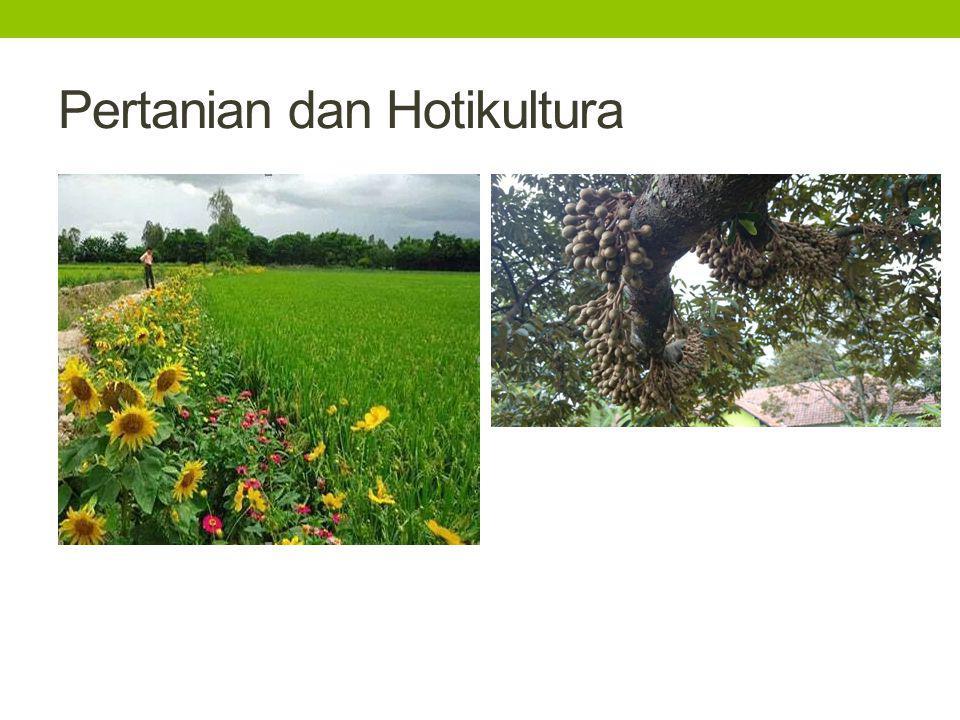 Pertanian dan Hotikultura