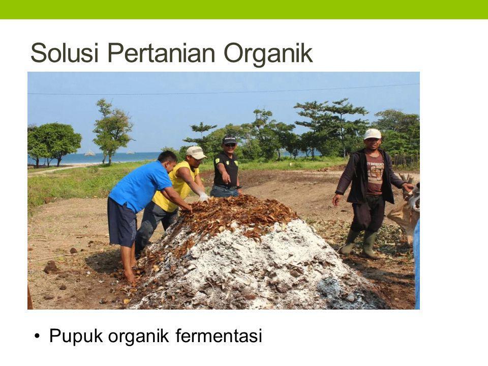 Solusi Pertanian Organik