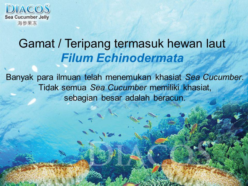 Gamat / Teripang termasuk hewan laut Filum Echinodermata