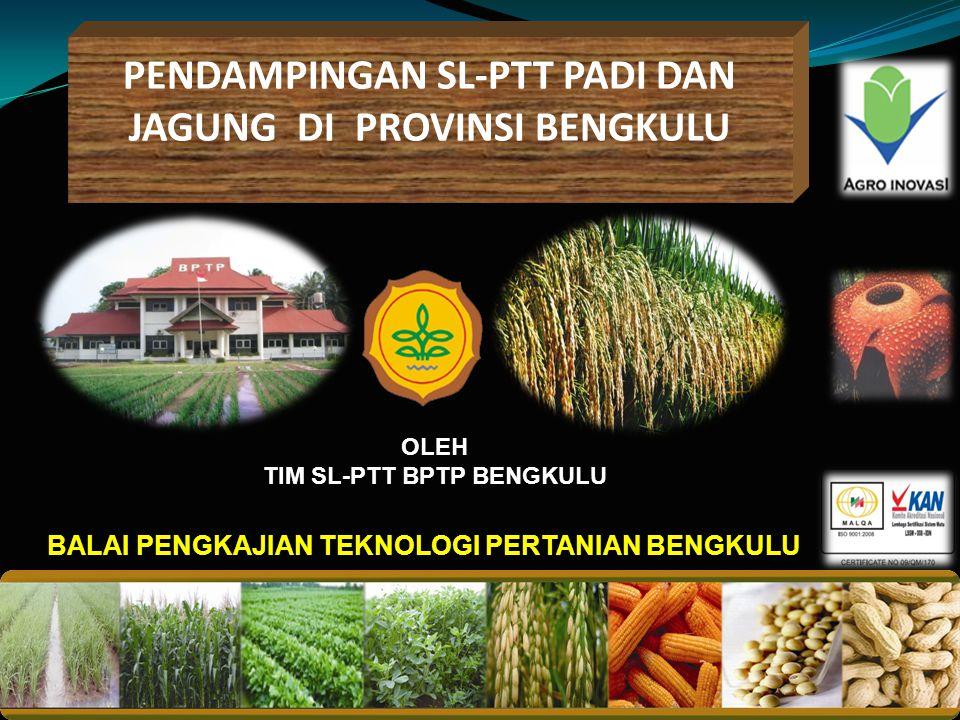 Pendampingan SL-PTT PADI DAN JAGUNG di Provinsi Bengkulu