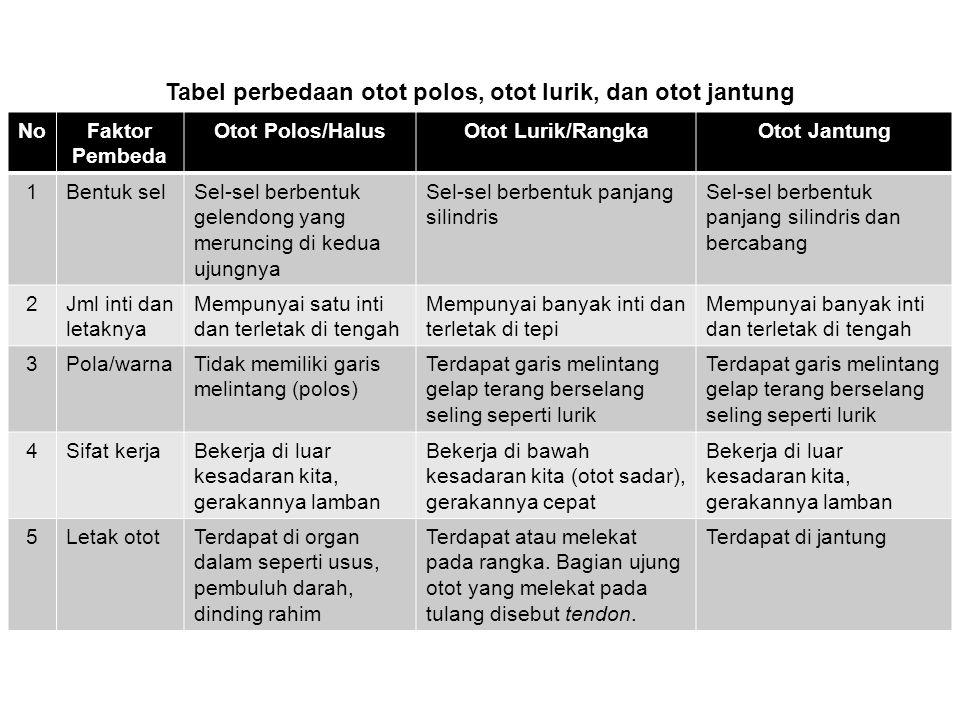Tabel perbedaan otot polos, otot lurik, dan otot jantung
