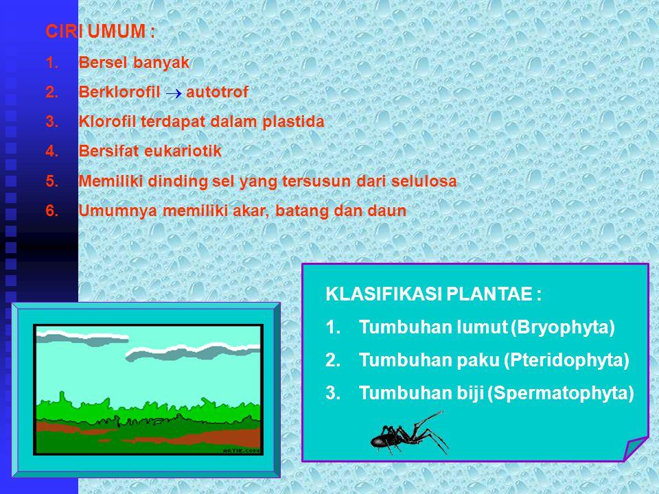 Tumbuhan lumut (Bryophyta) Tumbuhan paku (Pteridophyta)