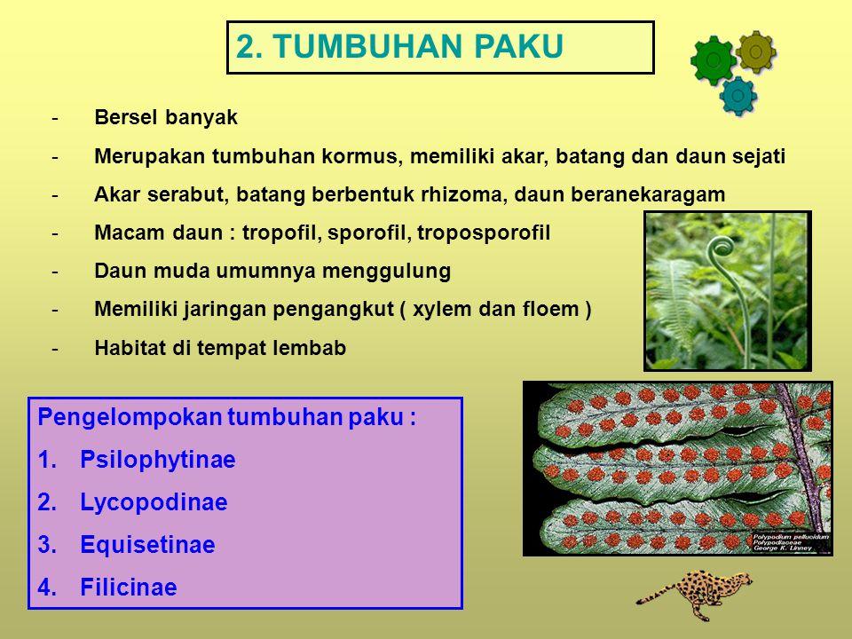 2. TUMBUHAN PAKU Pengelompokan tumbuhan paku : Psilophytinae