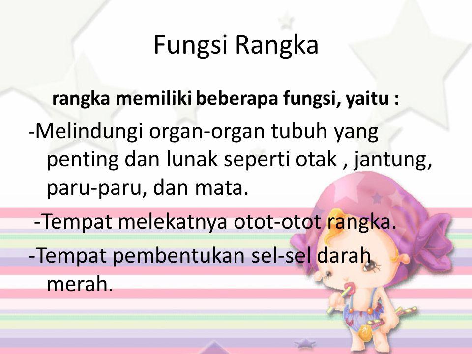 Fungsi Rangka -Tempat melekatnya otot-otot rangka.