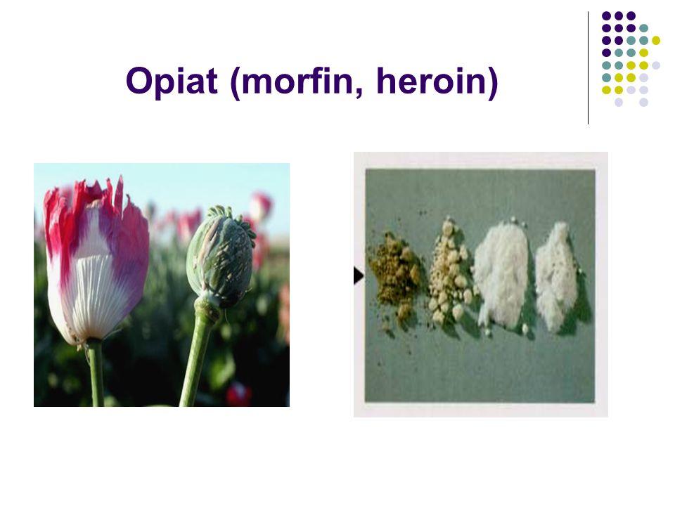 Opiat (morfin, heroin)