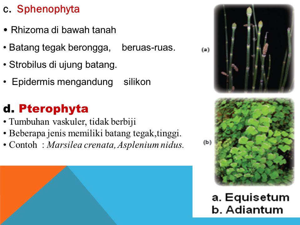 d. Pterophyta c. Sphenophyta Rhizoma di bawah tanah