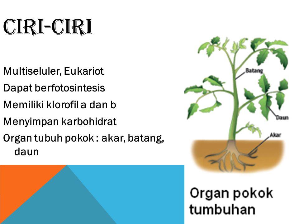 CIRI-CIRI Multiseluler, Eukariot Dapat berfotosintesis