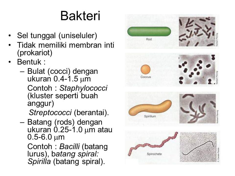 Bakteri Sel tunggal (uniseluler)