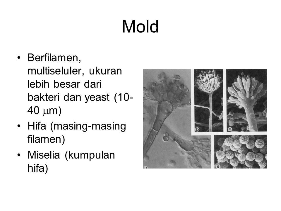 Mold Berfilamen, multiseluler, ukuran lebih besar dari bakteri dan yeast (10-40 m) Hifa (masing-masing filamen)