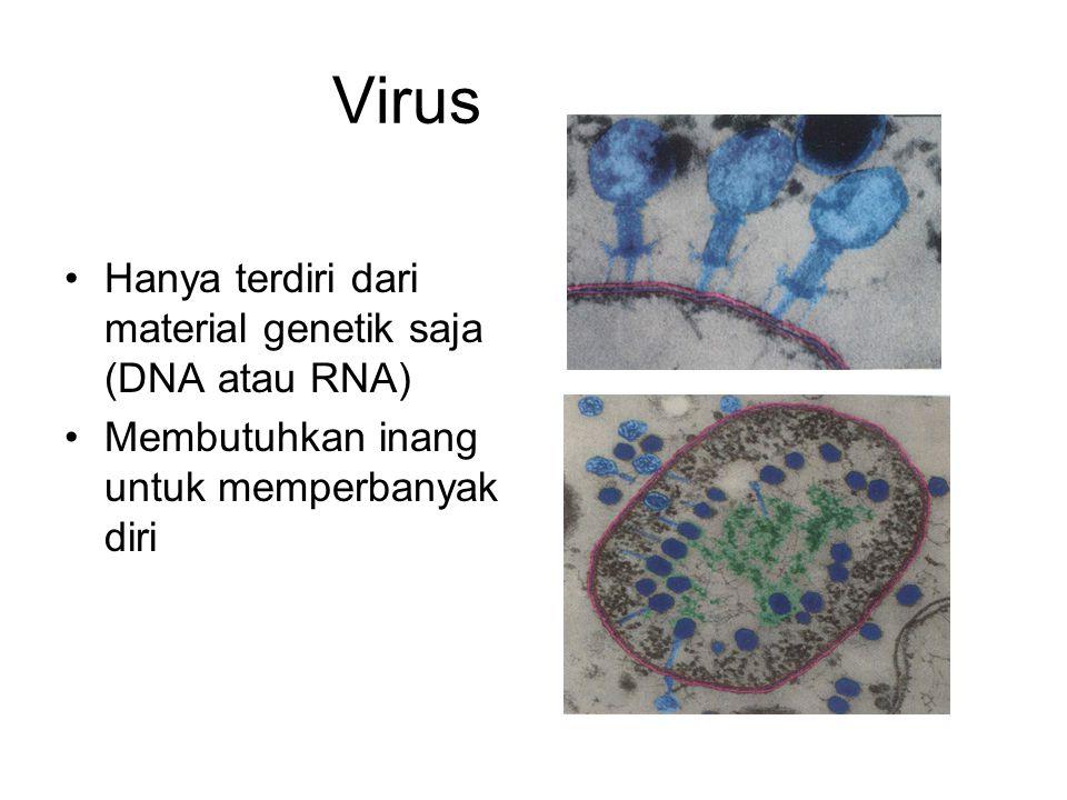 Virus Hanya terdiri dari material genetik saja (DNA atau RNA)